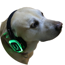 Barley the dog - Event Headset Hire